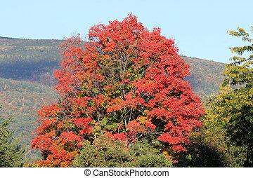 new england indian summer tree