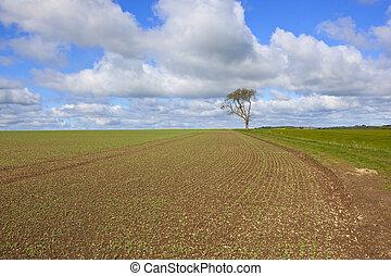 newly planted springtime pea field