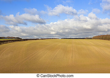 newly sown wheat crop