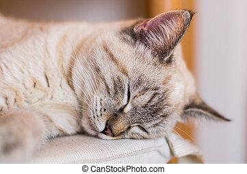 A nice sleeping cat blissful