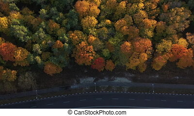 A nice smooth asphalt road for cars passing through a large and beautiful dense forest near the city. Sunny and warm weather for a walk in the forest. Top view of many trees and the road between them.