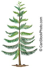 Illustration of a Norfolk island pine on a white background