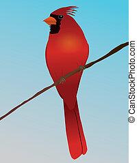 A Northern cardinal bird on a branch