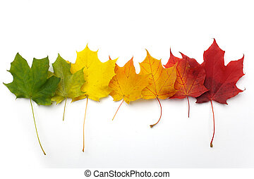A number of colorful autumn leaves on white background