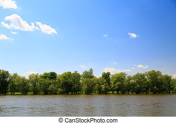 trees on the river Bank