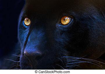 a, olhos, de, um, predador