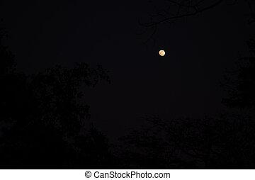 A orange moon in the dark night