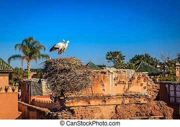 a, paar, von, storch, in, ihr, nest, in, marrakesh