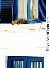 A pair of cats relaxing on windowsill