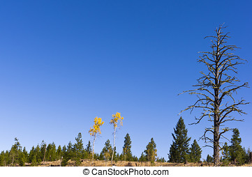 A pair of colorful autumn aspens