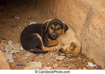 A pair of cute puppies
