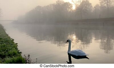 A Pair Of Elegant Swans floating on the water On A Beautiful...