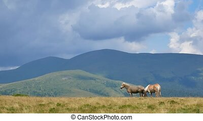 A pair of horses in a mountain. Love concept