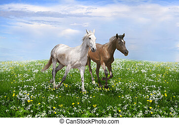 a pair of horses running on a bloss