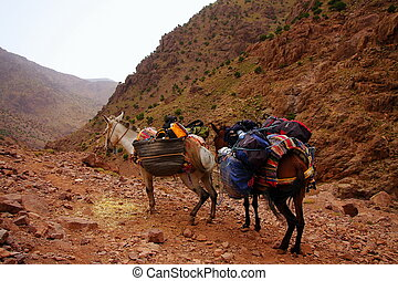 A pair of moroccan donkeys resting with their carriage on...