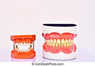 A pair of plastic human teeth models