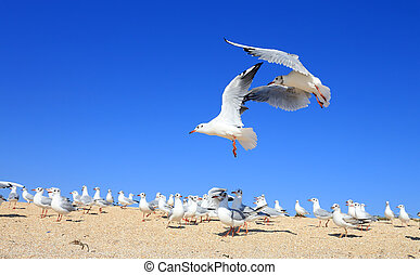 pair of young seagulls are flying over the flock