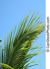 Palm Frond - A Palm Frond against a blue sky