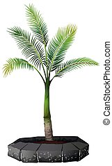 A palm tree on white background