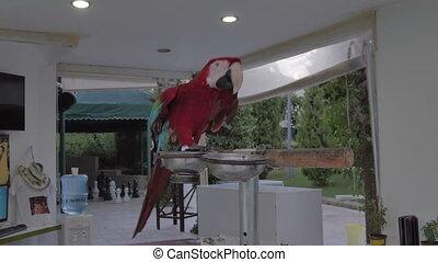 A parrot. Red Ara. - A parrot. Red Ara Beautiful bird 4k