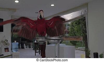A parrot. Red Ara. - A parrot. Red Ara Beautiful bird