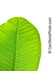 a part of green leaf