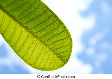 a part of green leaf with clear blue sky