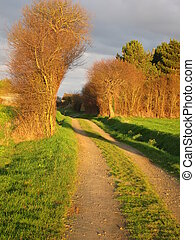 A path in Brittany
