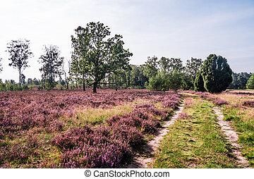 Lueneburg Heath - a path in Lueneburg Heath on a sunny...