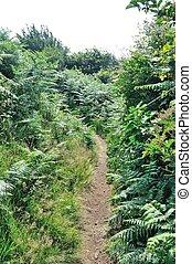 A path in summer