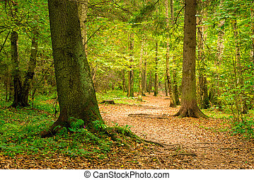 A path in the autumn forest, a beautiful authentic landscape