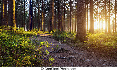 A Path in the Forest - hiker path in to the deep forest at...