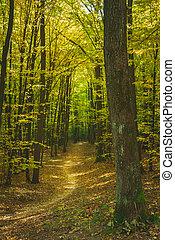 A path through a dark forest, fallen leaves on an autumn sunny day