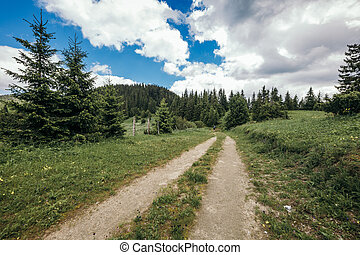 A path with trees on the side of a dirt road