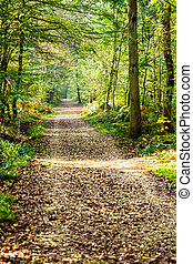 A pathway covered by leaves in a dense forest with filtered rays of light II