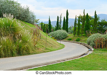 A pathway in the garden