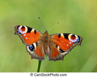 A peacock butterfly sitting on a flower on a sunny day in summer