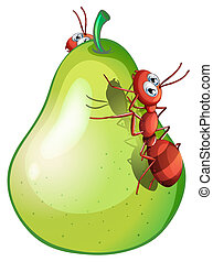 A pear with two ants - Illustration of a pear with two ants
