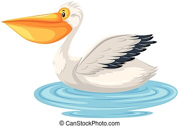 A pelican in the water
