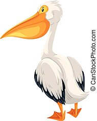 A pelican on white background