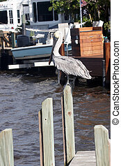 A pelican perched on a post
