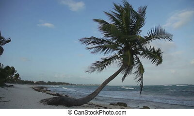 a perfect paradise beach with a lone palm tree, mexican caribbean coast