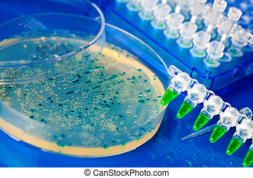 a Petri Dish with growing Virus and bacteria cells. microorganism