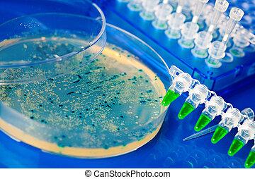 a, petri rätt, med, växande, virus, och, bakterie, cells.,...