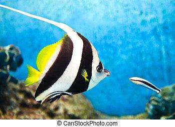 A photo of tropical fish in an aquarium.