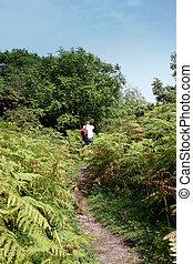 A photographer walking through the ferns