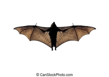 A photography of a flying bat in nature