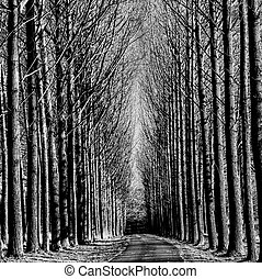 A picture of beautiful view of tree lined road