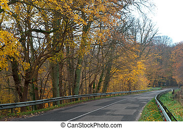 a picturesque autumn highway, trees with yellow leaves on the road
