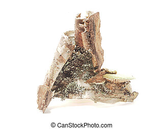 A piece of birch bark on a white background